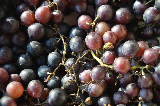 Kara üzüm çekirdeği faydaları nelerdir? Kara üzüm çekirdeği zayıflatır mı?